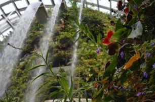 Der Wasserfall am Eingang des Cloud Forest