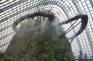 """Deswegen heißt es """"Wolkenwald"""" ^^ Oben sichtbar: Die Besucherwege."""