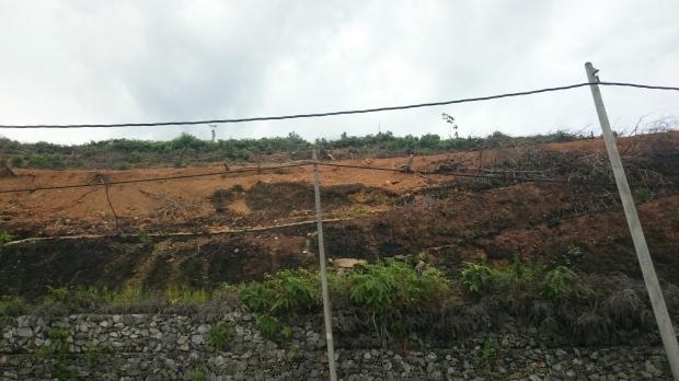 So sieht das Gelände zwischen den Palmfeldern aus.